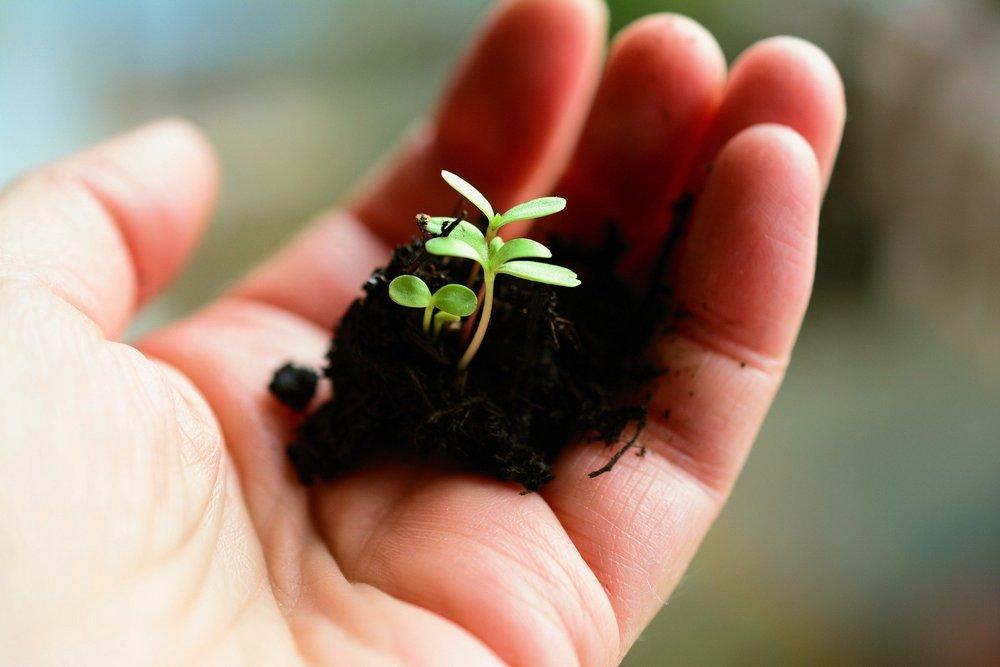 הזדמנויות לצמיחה